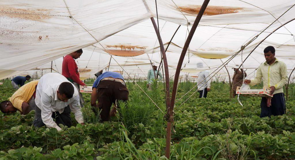 «Πράσινο φως» για τις αποζημιώσεις στους μετανάστες της Μανωλάδας | Pagenews.gr