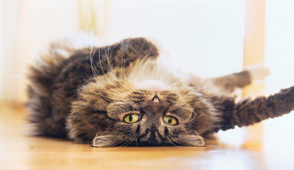 Ήρθε και η απόδειξη: Οι γάτες αγαπούν τους ανθρώπους!   Pagenews.gr