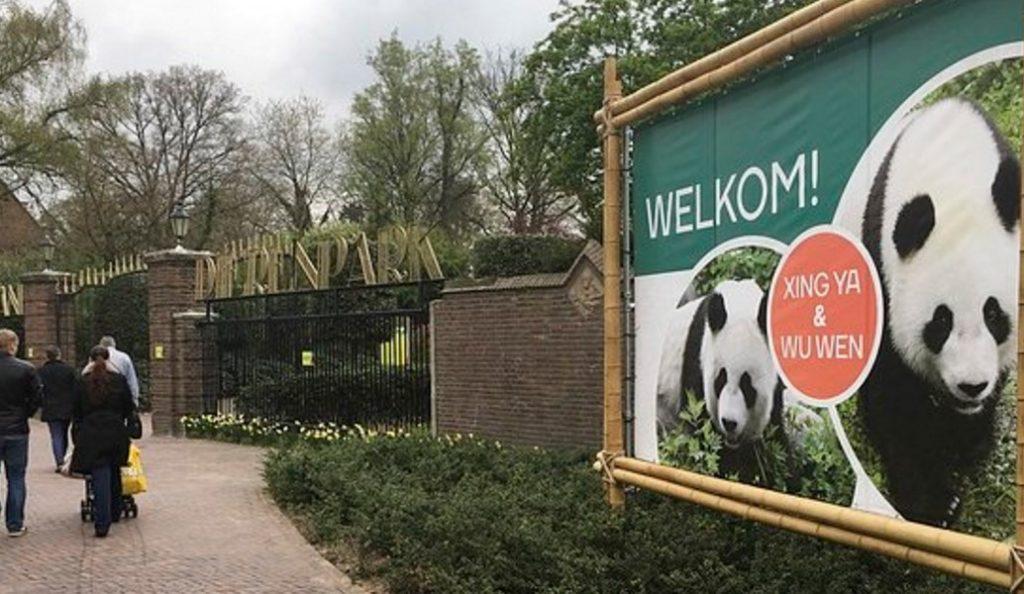 Δύο γιγάντια πάντα θα φιλοξενηθούν για 15 χρόνια σε ολλανδικό ζωολογικό κήπο | Pagenews.gr