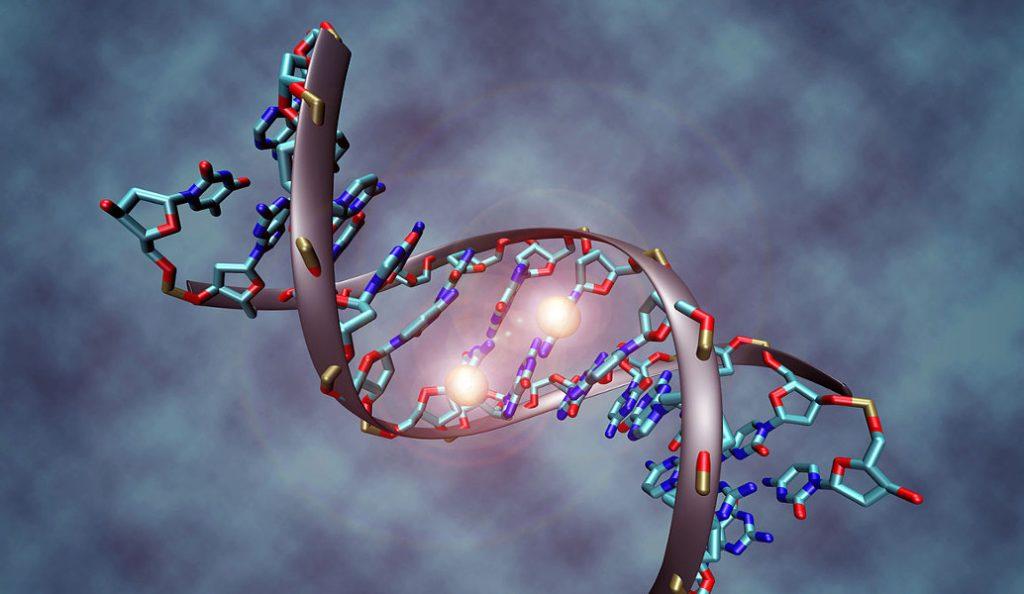«Μάχη» των φύλων και στα γονίδια | Pagenews.gr