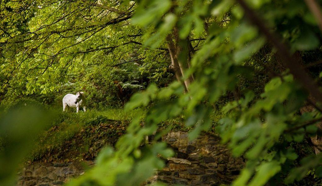 Εκδόθηκε η Κοινή Υπουργική Απόφαση για τους δασικούς χάρτες   Pagenews.gr