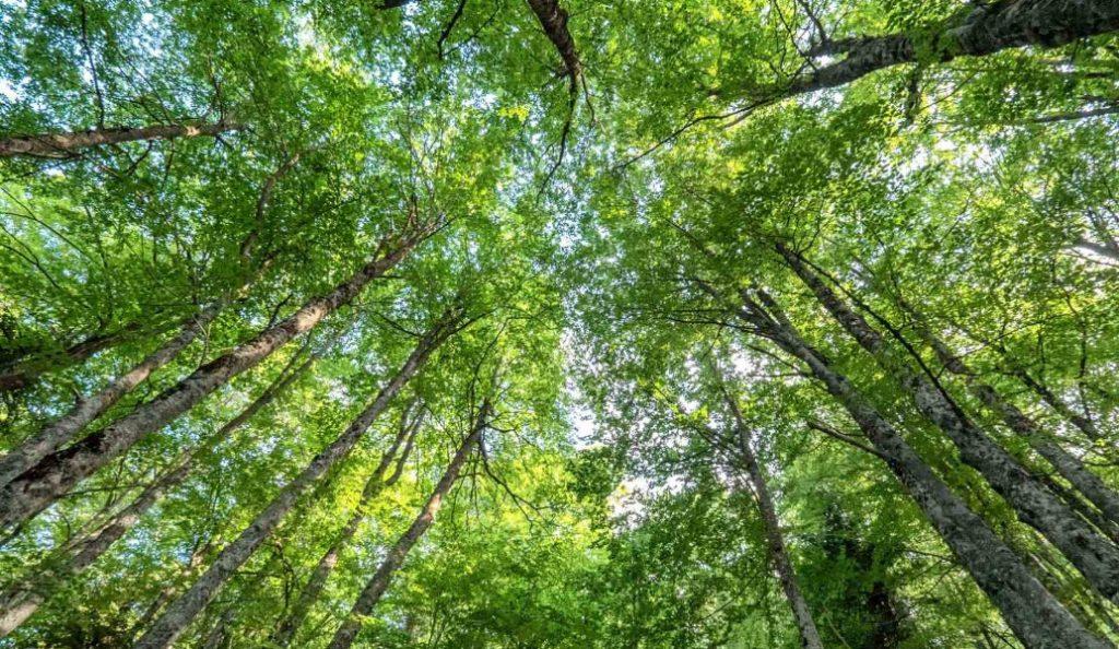 Ρέθυμνο: Απαγόρευση κυκλοφορίας οχημάτων σε δασικές περιοχές | Pagenews.gr