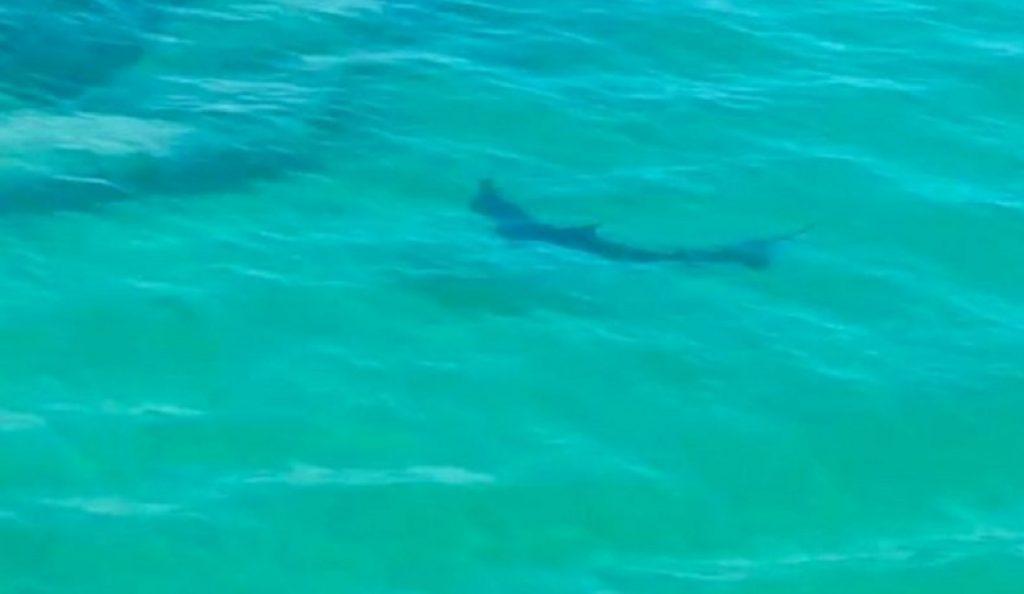 Βρετανία: Βγήκαν στην παραλία καρχαρίες (vid) | Pagenews.gr