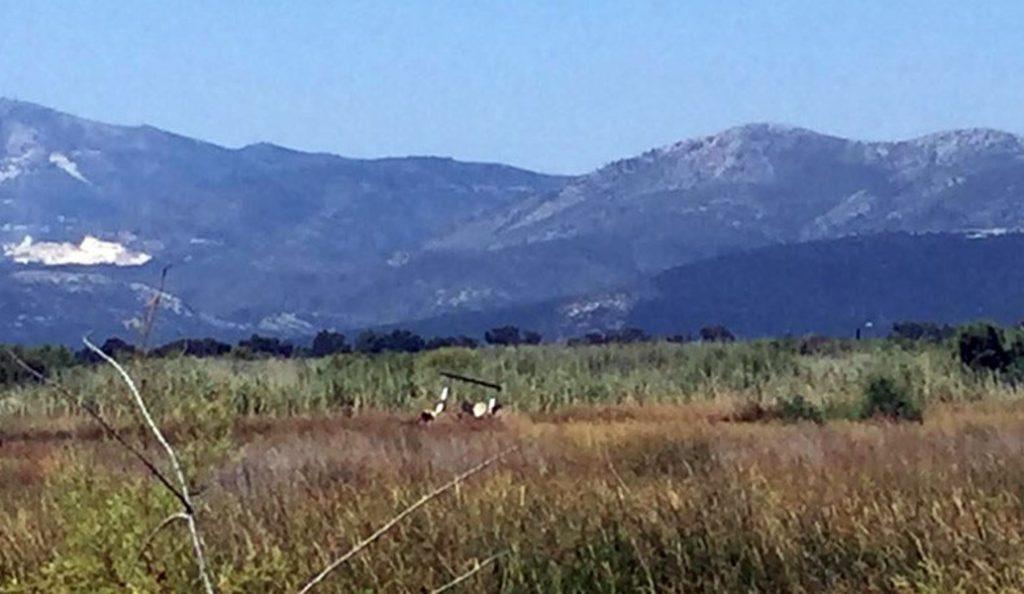Η Περιφέρεια Αττικής για την τραγωδία στον Σχινιά: Βαθιά οδύνη για τον θάνατο των δύο ανθρώπων   Pagenews.gr