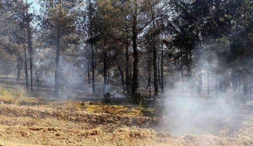 Πυρκαγιά στη Λιθακιά Ζακύνθου   Pagenews.gr