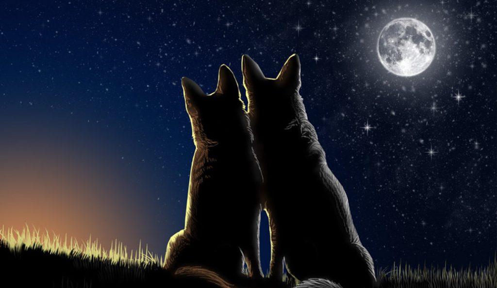 Ερωτική Σελήνη για την Τετάρτη για όλα τα ζώδια ! | Pagenews.gr