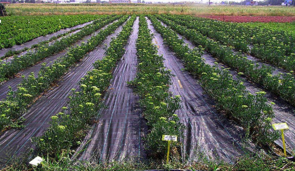 Στις 3.500 οι αιτήσεις για ένταξη στο πρόγραμμα Νέων Αγροτών στην Κ. Μακεδονία   Pagenews.gr