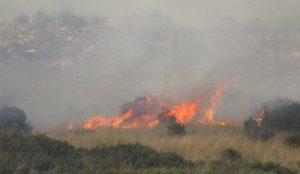 ΦΩΤΙΑ ΤΩΡΑ: Υπό έλεγχο η φωτιά στο χωριό Λαμπίρη της Ηλείας | Pagenews.gr