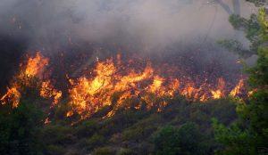 Ηλεία: Δύο συλλήψεις για τις πυρκαγιές στο Γεράκι | Pagenews.gr