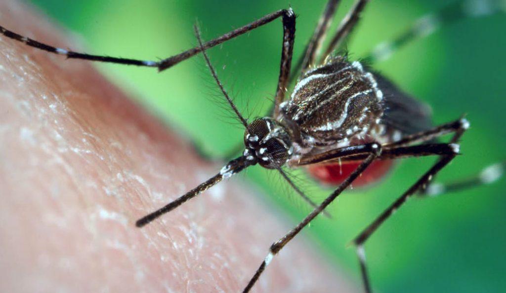 Εφαρμογή στο κινητό σε προειδοποιεί ότι …πλησιάζει κουνούπι | Pagenews.gr