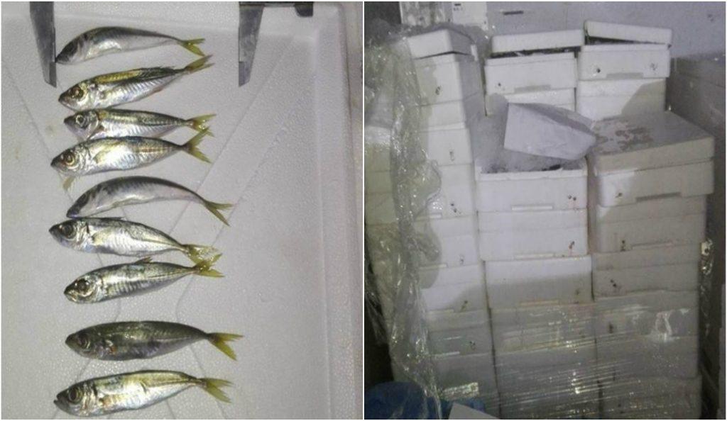 Κατάσχεση μεγάλης ποσότητας αλιευμάτων στη Νέα Μηχανιώνα | Pagenews.gr