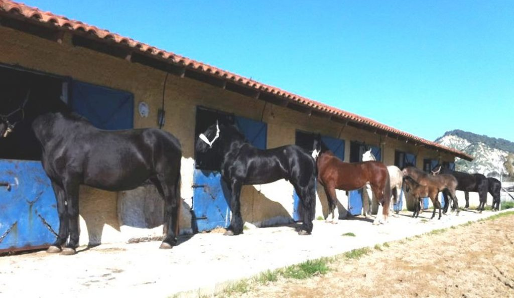 Χανιά: Επιβεβαιώθηκε κρούσμα πυρετού του Δυτικού Νείλου σε άλογο | Pagenews.gr
