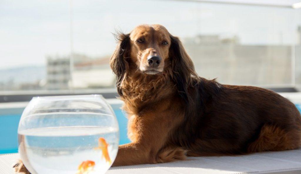 Re – Action: Η νέα φιλοζωική μη – εμπορική ταινία για τη προστασία των αδέσποτων ζώων (vid) | Pagenews.gr