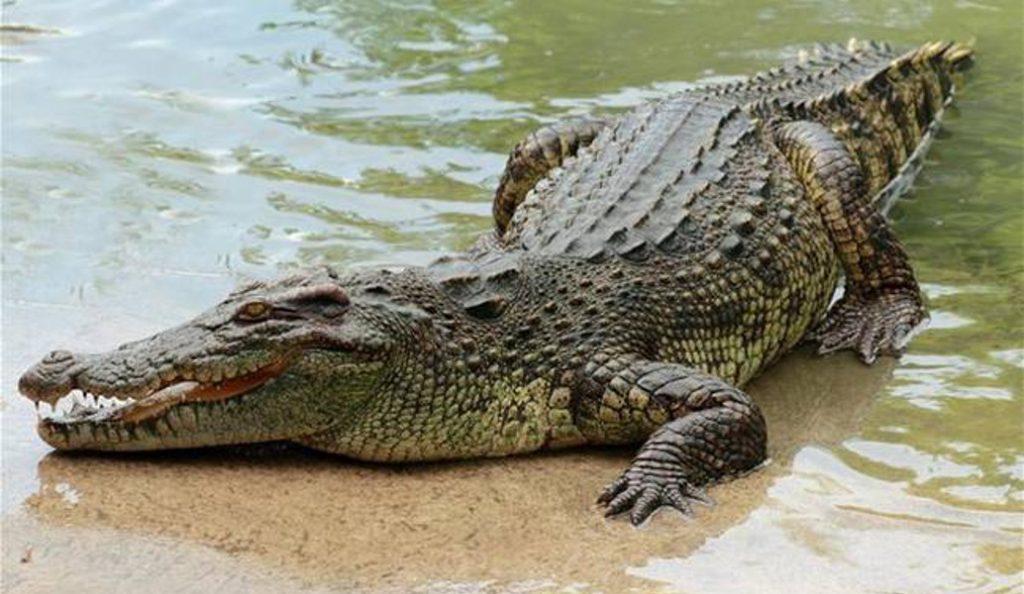 ΗΠΑ: Κροκόδειλος βρίσκει τρόπο να πάρει ανάσα σε παγωμένη λίμνη (vid)   Pagenews.gr