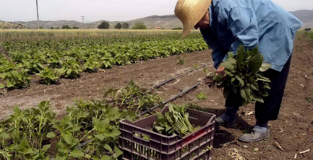 Στηρίζει το αγροτικό επιχειρείν η Κίνα | Pagenews.gr