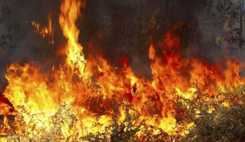 Καλιφόρνια: Ένας νεκρός και μεγάλες καταστροφές από δασική πυρκαγιά | Pagenews.gr