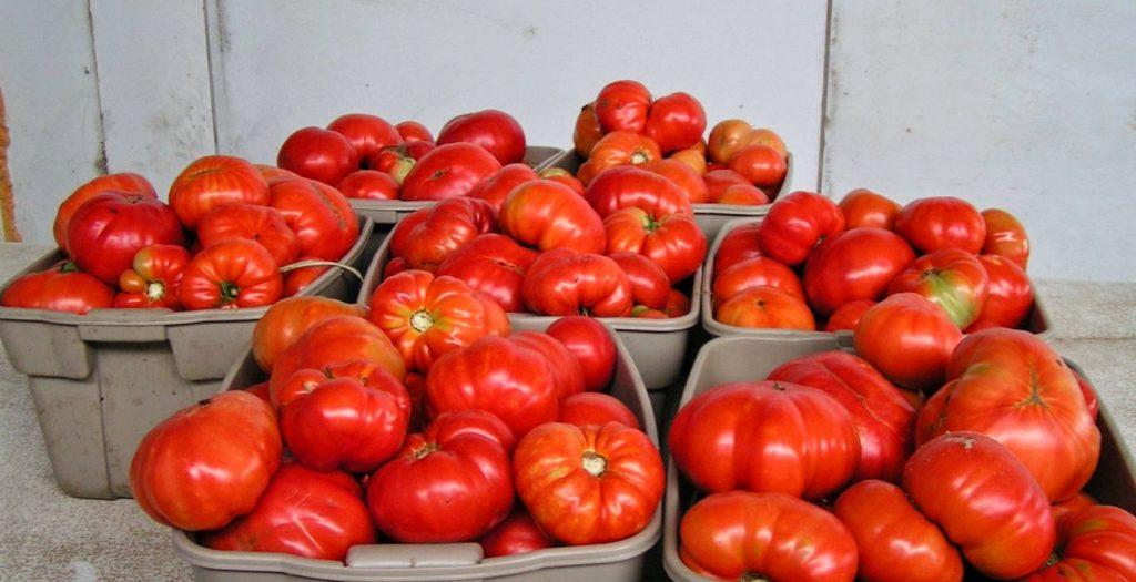 Επικίνδυνες ντομάτες θα έπεφταν στην αγορά της Αθήνας   Pagenews.gr