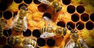 Η Ε.Ε. θα επεκτείνει τις απαγορεύσεις για τα εντομοκτόνα | Pagenews.gr