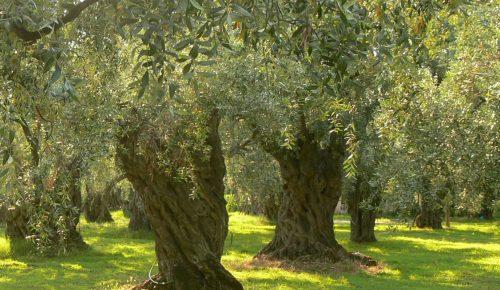 Πότε ξεκινούν οι αιτήσεις αγροτών για τα συστήματα πρόληψης ζημιών | Pagenews.gr