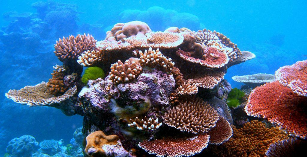 Αυστραλία: Εκτεταμένος θάνατος κοραλλιών | Pagenews.gr
