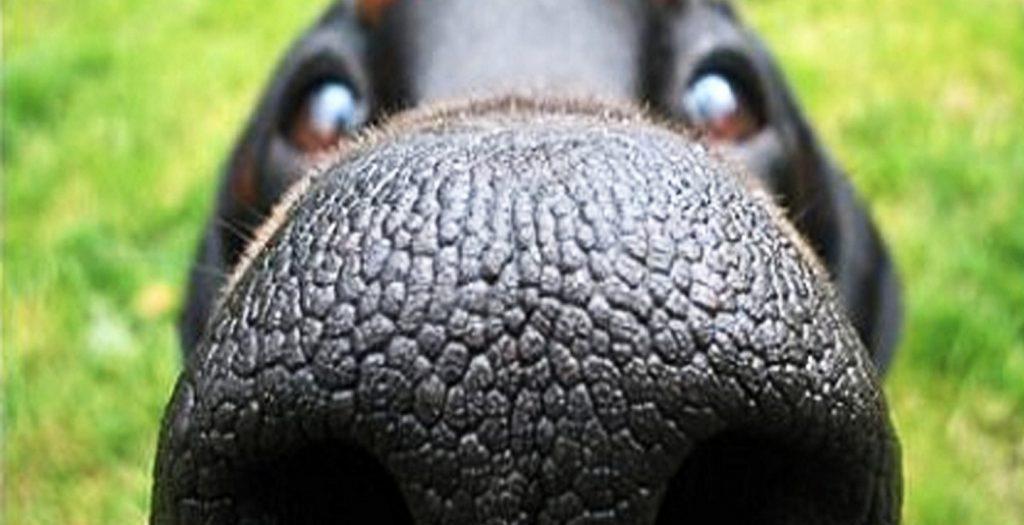 Τεχνητή 3D μύτη σκύλου για εντοπισμό ναρκωτικών και εκρηκτικών | Pagenews.gr