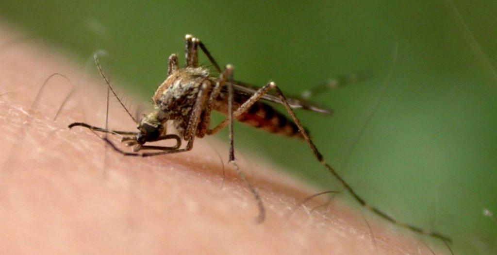 Νικήστε τα κουνούπια με φυσικούς τρόπους!   Pagenews.gr