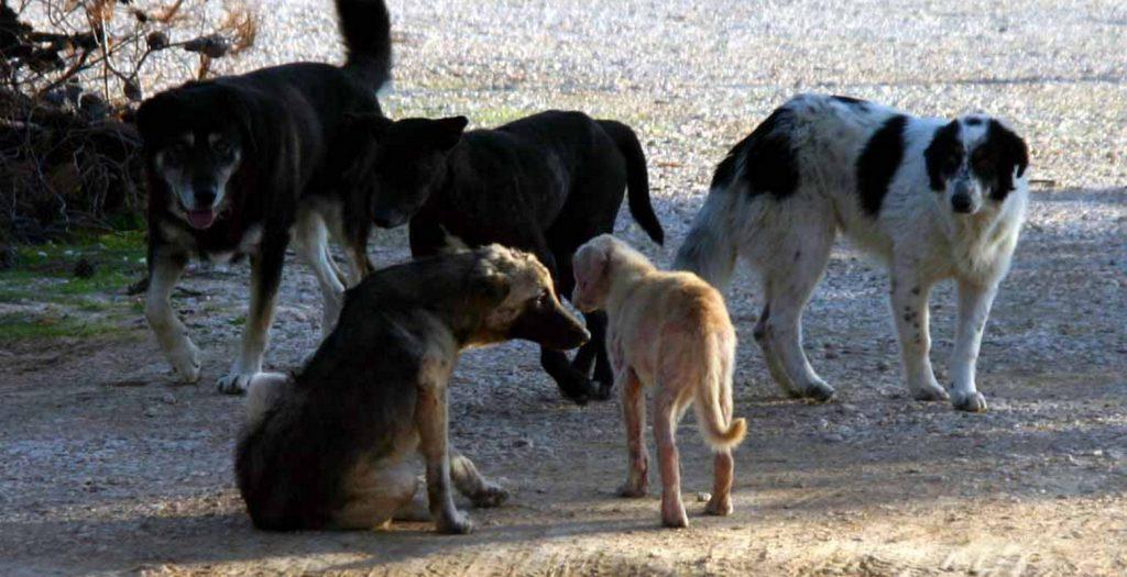 Διάθεση 600.000 ευρώ σε φορείς της Τοπικής Αυτοδιοίκησης για τα καταφύγια αδέσποτων ζώων | Pagenews.gr