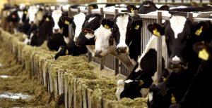 Kiki challenge: Αγελάδα ακολουθεί την νέα μανία των social media (vid) | Pagenews.gr