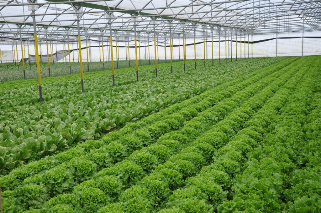 Η βιολογική γεωργία στη Λακωνία είναι υπό διωγμό | Pagenews.gr