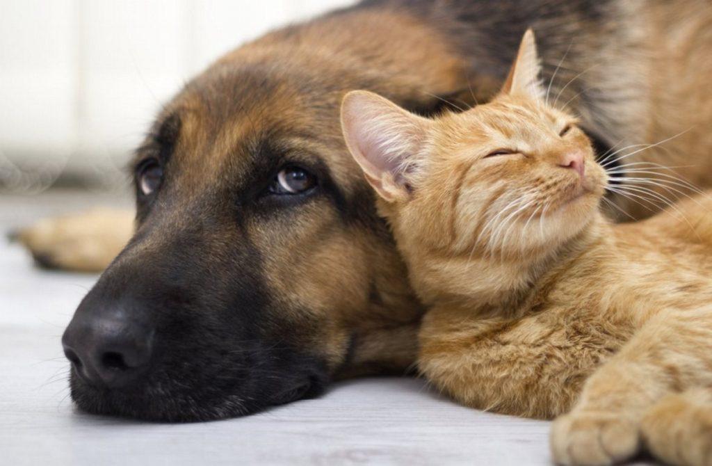 ΗΠΑ: Άφησε πάνω από 1 εκατ. δολάρια σε σκύλους και γάτες! | Pagenews.gr