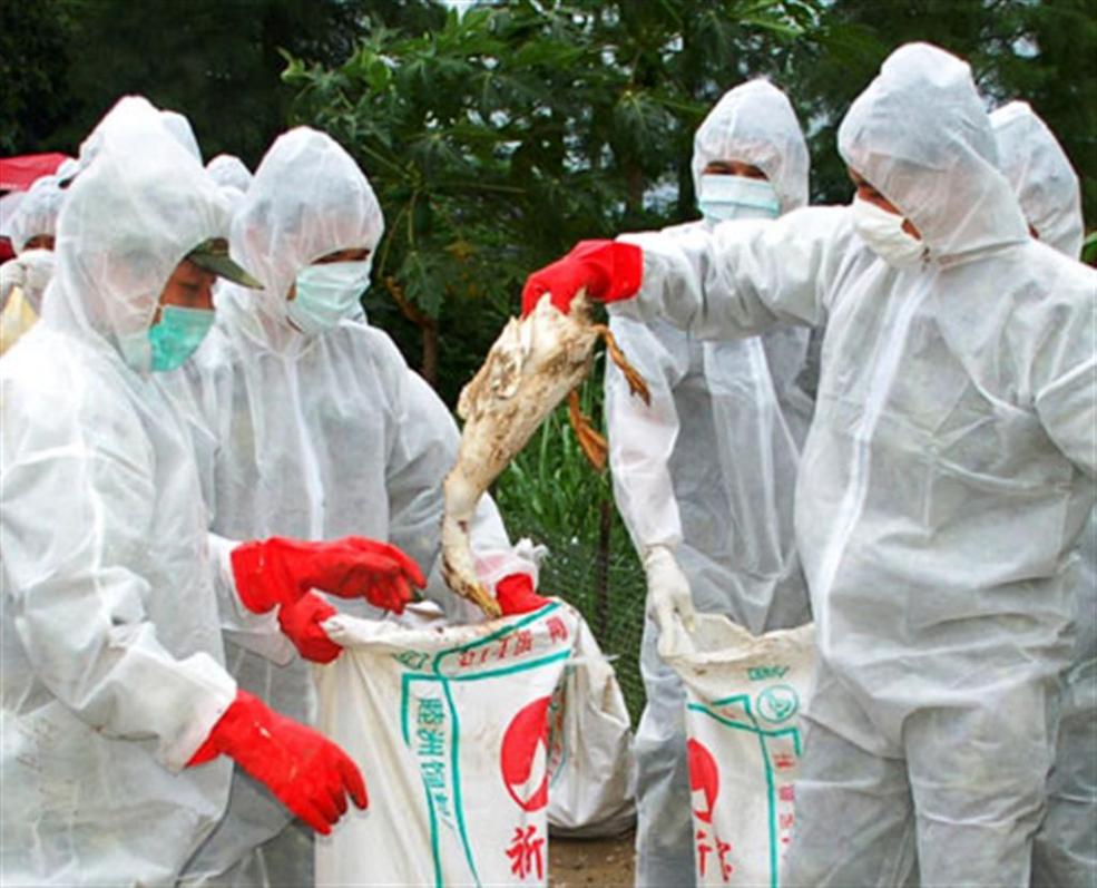 Επιστρέφει ο εφιάλτης της γρίπης των πτηνών   Pagenews.gr