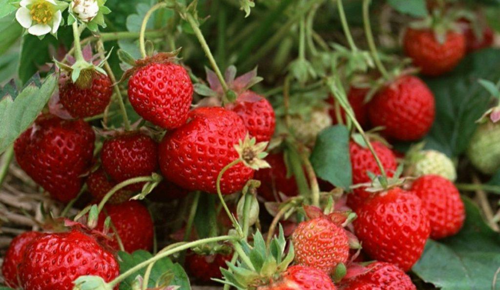 Τα δώδεκα πιο «βρόμικα» φρούτα και λαχανικά | Pagenews.gr