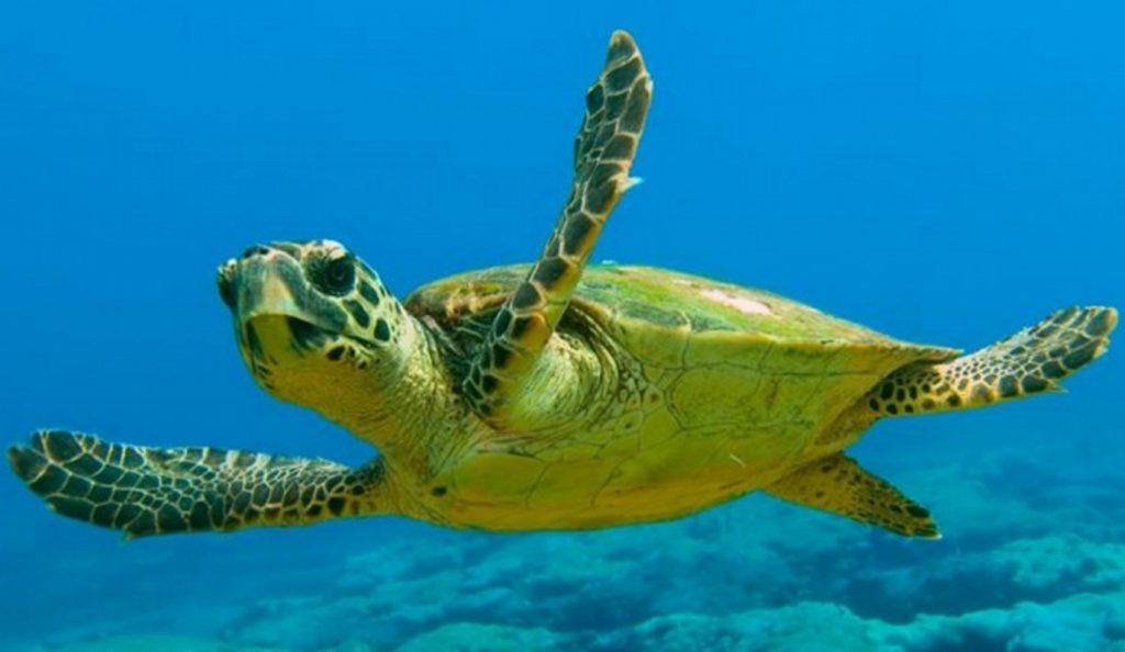 Νεκρή θαλάσσια χελώνα στη Λακωνία | Pagenews.gr