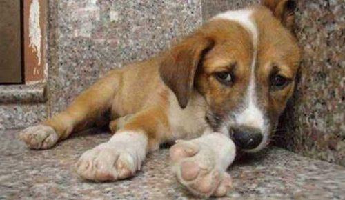 Χρηματοδοτήσεις στους Δήμους για τη λειτουργία καταφύγιων αδέσποτων ζώων συντροφιάς | Pagenews.gr