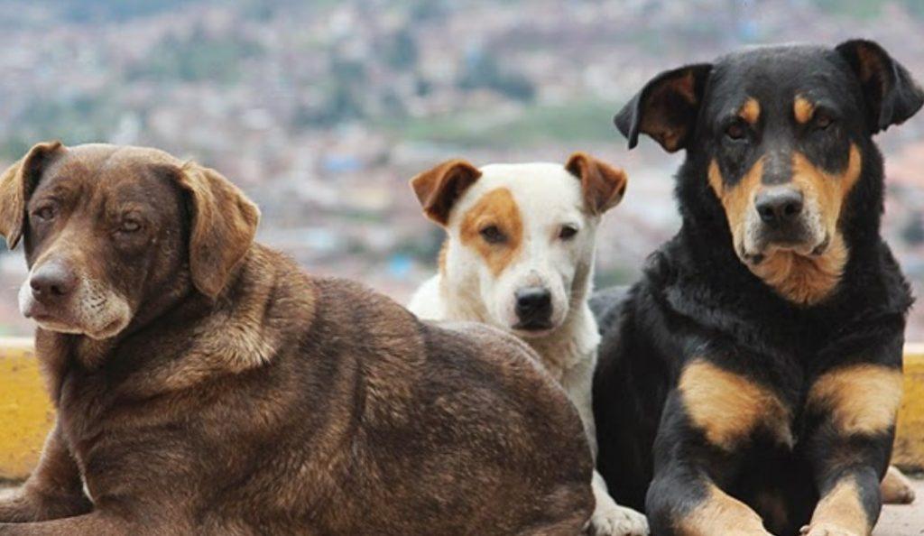 Δήμοι: Επιδοτήσεις από το Υπουργείο Εσωτερικών για τα αδέσποτα ζώα | Pagenews.gr