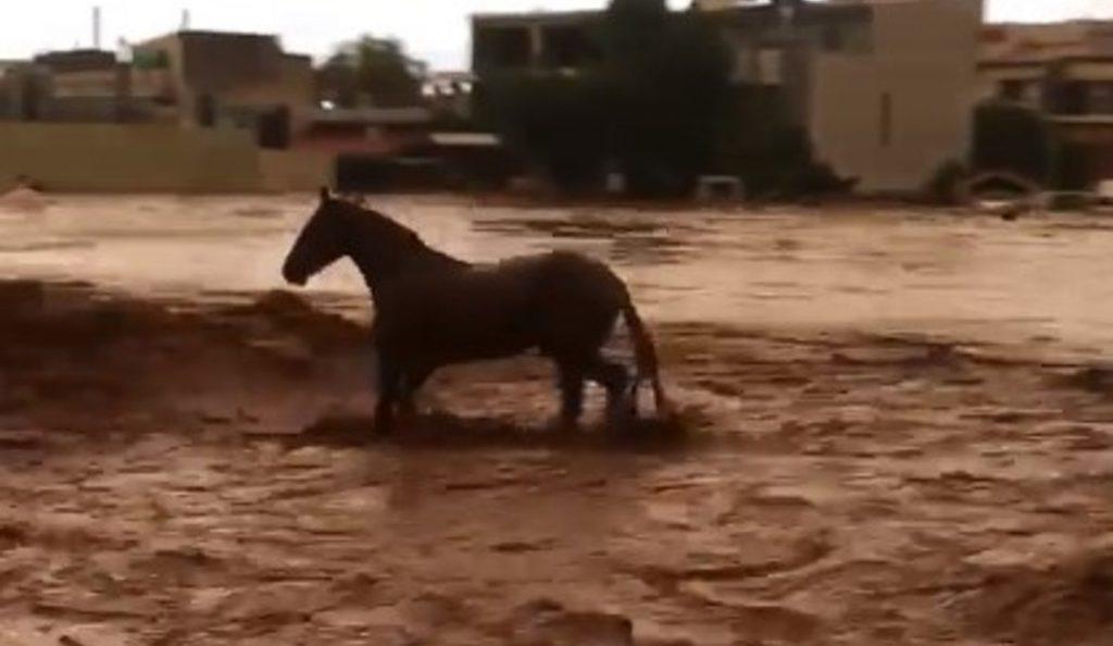 Δυτική Αττική: Καρέ – καρέ η προσπάθεια ενός αλόγου να σωθεί από χείμαρρο στη Μάνδρα (vid) | Pagenews.gr