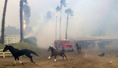 Καλιφόρνια: Βιβλική καταστροφή από τις φωτιές | Pagenews.gr