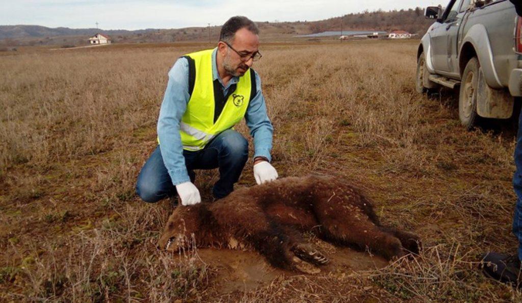 Καστοριά: Δηλητηρίασαν μικρό αρκουδάκι | Pagenews.gr