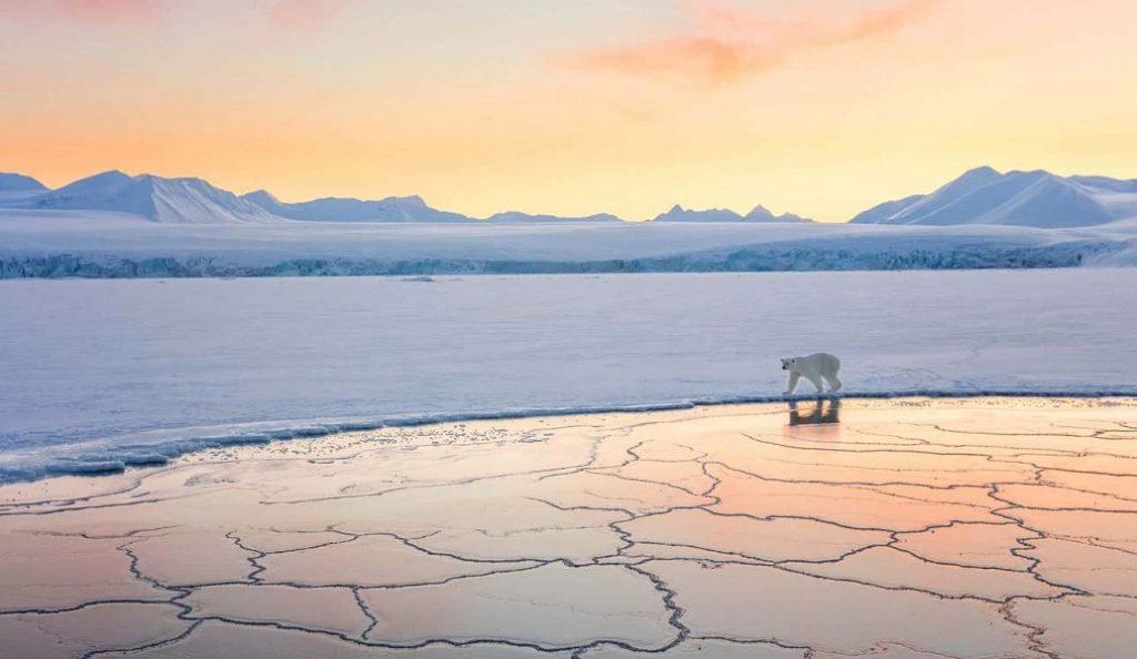 Φωτογράφος Άγριας Φύσης της Χρονιάς: Αυτές είναι οι 10 καλύτερες φωτογραφίες (pics) | Pagenews.gr