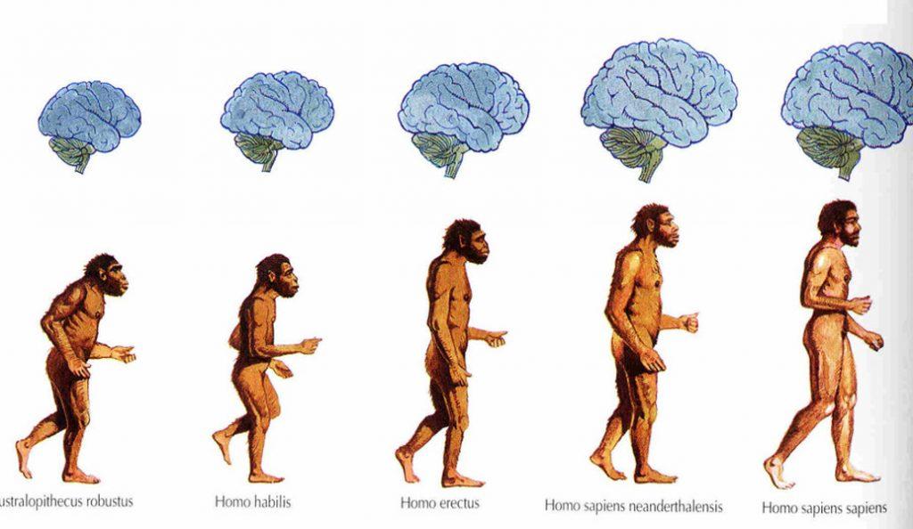 Εγκέφαλος: Πώς η αλλαγή στο σχήμα του ανά τους αιώνες επηρεάζει τη σκέψη   Pagenews.gr