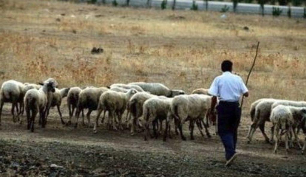 Ημαθία: Mέσα Φεβρουαρίου τα μισθώματα βοσκοτόπων | Pagenews.gr