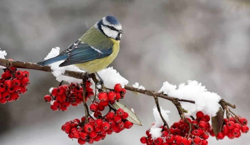Φεβρουάριος: Καλό μήνα – Τα ήθη και τα έθιμα | Pagenews.gr
