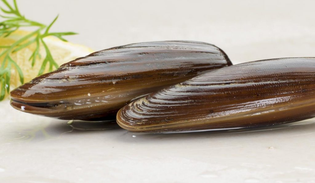 Πίνες και πετροσωλήνες: Τα εκλεκτά «προστατευόμενα» θαλασσινά που φτάνουν στο πιάτο μας | Pagenews.gr