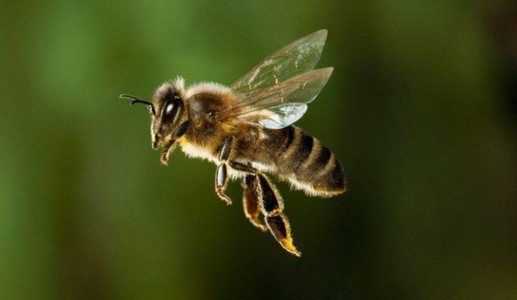 Ηράκλειο Κρήτης: Ηλικιωμένη έχασε τη ζωή της από τσίμπημα μέλισσας | Pagenews.gr