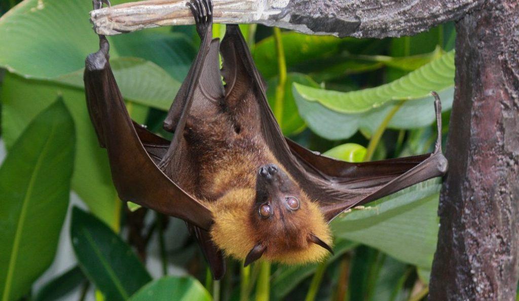 Έρευνα: Επιστήμονες ψάχνουν το μυστικό της μακροζωίας στις νυχτερίδες | Pagenews.gr