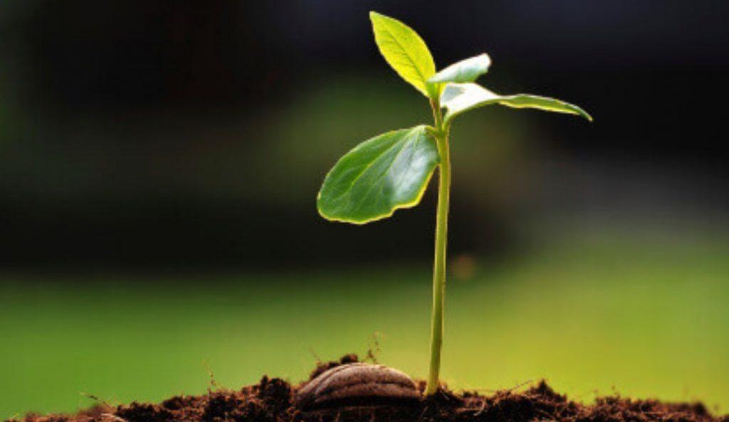 Θεσσαλονίκη: Φύτευση καλλωπιστικών φυτών από το Δήμο Θερμαϊκού   Pagenews.gr