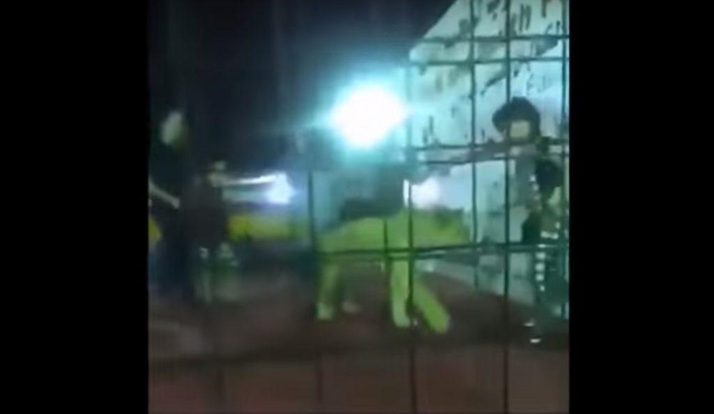 Σαουδική Αραβία: Λιοντάρι επιτίθεται σε κοριτσάκι (vid) | Pagenews.gr
