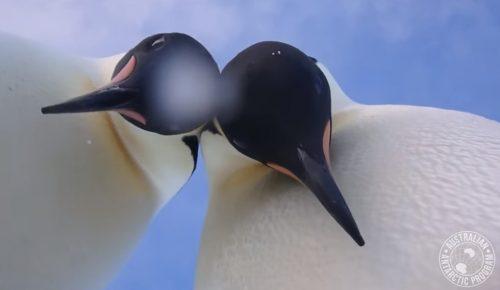 Viral: Αυτοκρατορικοί πιγκουίνοι έβγαλαν την καλύτερη selfie (pic & vid) | Pagenews.gr