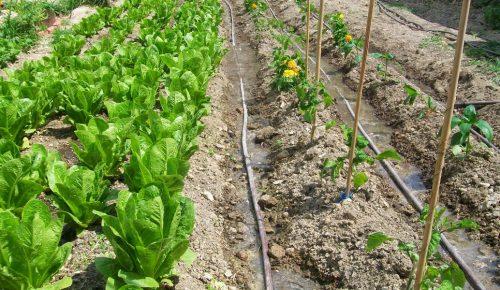 Φτιάξε τον δικό σου λαχανόκηπο στο ΑΠΘ – Μέχρι την Τρίτη οι αιτήσεις | Pagenews.gr