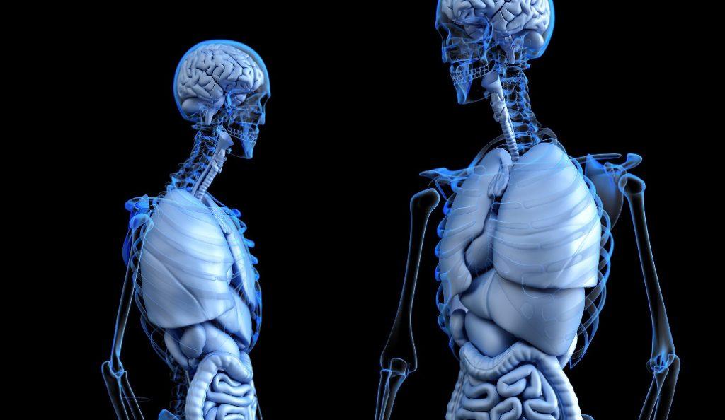 Ανακαλύφθηκε νέο όργανο στο ανθρώπινο σώμα   Pagenews.gr